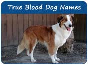 True Blood Dog Names