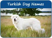 Turkish Dog Names