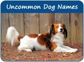 Uncommon Dog Names