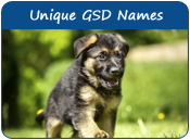 Unique German Shepherd Dog Names