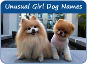 Unusual Girl Dog Names