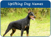 Uplifting Dog Names