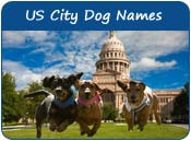 US City Dog Names