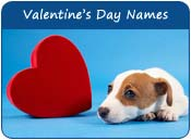 Valentine's Day Dog Names