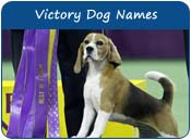 Victory Dog Names