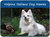 Volpino Italiano Dog Names