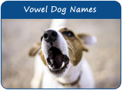 Vowel Dog Names