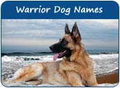 Warrior Dog Names