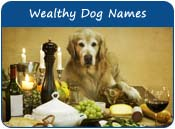 Wealthy Dog Names