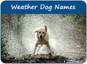 Weather Dog Names