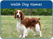 Welsh Dog Names