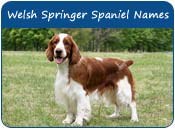 Welsh Springer Spaniel Dog Names