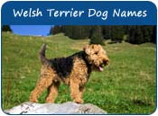 Welsh Terrier Dog Names