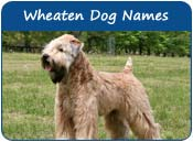 Wheaten Dog Names