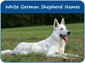 White German Shepherd Names