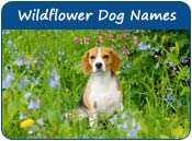 Wildflower Dog Names