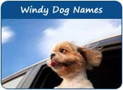 Windy Dog Names