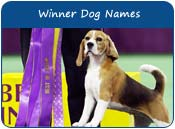 Winner Dog Names