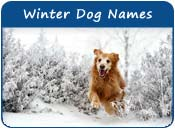 Winter Dog Names