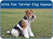 Wire Fox Terrier Dog Names