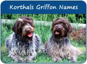 Wirehaired Pointing Griffon Dog Names
