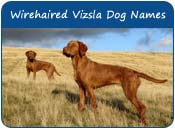 Wirehaired Vizsla Dog Names