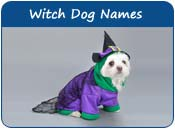 Witch Dog Names