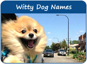 Witty Dog Names
