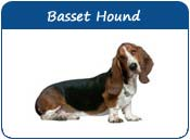 Basset Hound Dog Names