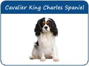 Cavalier King Charles Spaniel Dog Names