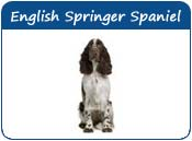 English Springer Spaniel Dog Names