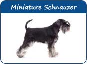 Miniature Schnauzer Dog Names