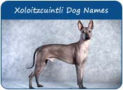 Xoloitzcuintli Dog Names