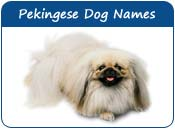 Pekingese Dog Names