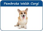 Pembroke Welsh Corgi Names