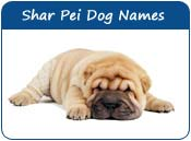Shar Pei Dog Names