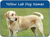 Yellow Lab Dog Names