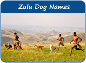 Zulu Dog Names